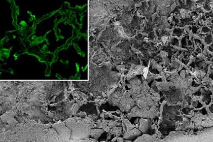 Обнаружены останки древнего загадочного организма