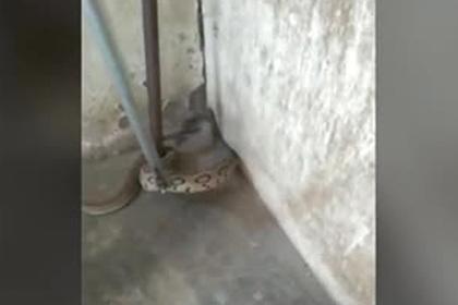Собаку спасли после схватки с угрожавшей ее хозяину ядовитой змеей