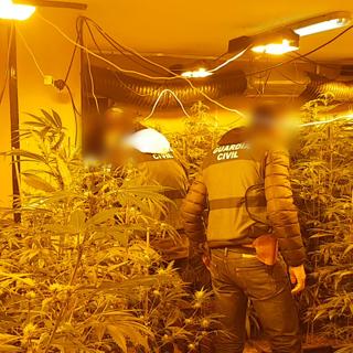Гражданская гвардия ликвидирует опасную преступную организацию, специализирующуюся на выращивании и генетической модификации марихуаны