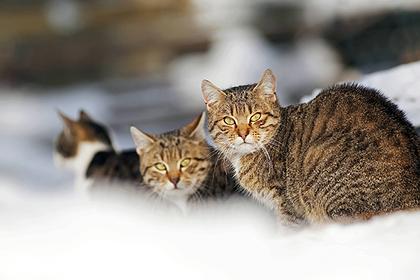 Россиянин решил прогнать кошек выстрелом и попал в пенсионерку в туалете