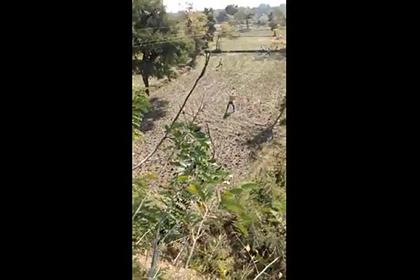 Тигр ворвался в деревню и покалечил людей