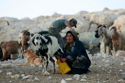 Власти Израиля захотели выжить бедуинов с их земель и разрушили деревню 173 раза