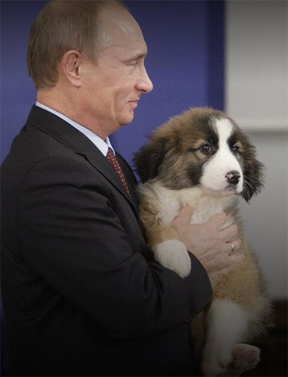 Путин с щенком Баффи, подаренным ему премьер-министром Болгарии Бойко Борисовым в ноябре 2010 года