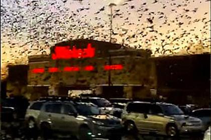 Тысячи черных граклов пронеслись над парковкой и посеяли панику