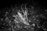 Дикие животные пьют воду из Днепра и близлежащих рек, где выявлен повышенный уровень загрязнения. Однако это не останавливает охотников, которые употребляют мясо убитых животных в пищу.
