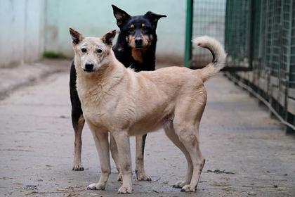 Российский депутат предложил продавать бездомных собак в Китай и Корею