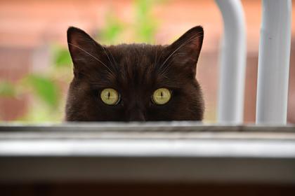 Россиянку с 20 кошками заставили прибраться в квартире