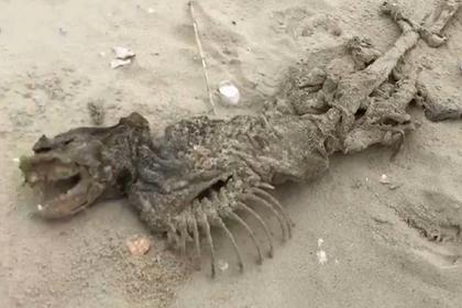 На пляже нашли загадочное безглазое существо с большими зубами