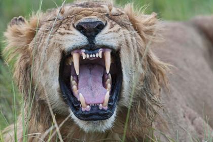 Разъяренные львы напали на молодую смотрительницу и загрызли ее