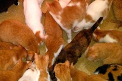 В квартире москвички развелось более сотни кошек