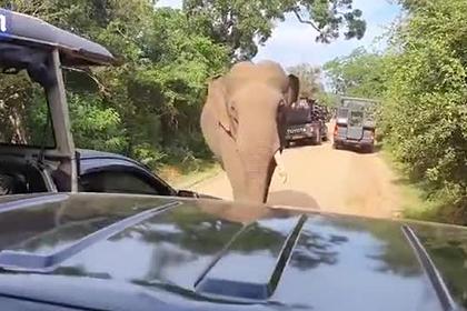 Печально известный слон залез в автомобиль с туристами и устроил погром