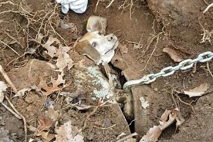Пес погнался за кроликом и застрял под землей в закопанной машине