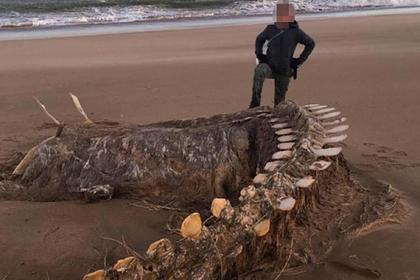 Гигантский скелет неопознанного существа вынесло на берег после шторма