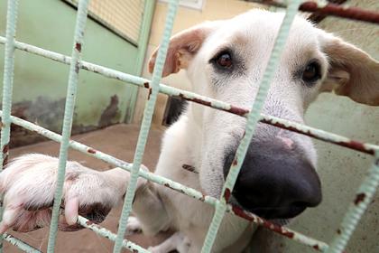 Власти Подмосковья рассказали о содержании безнадзорных животных