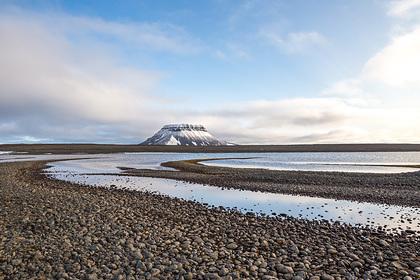 Изменение климата привело к сокращению популяции полярных животных