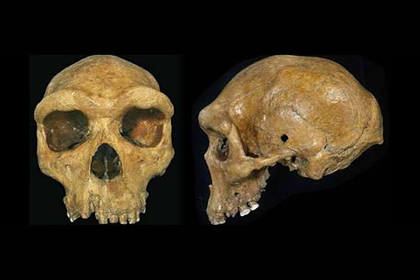 В ДНК людей нашли следы загадочного существа