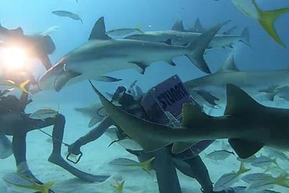 Дайверы утолили голод 50 акул и попали на видео