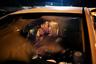 Нидерландская фотограф и журналист Илви Ньийокийктьен (Ilvy Njiokiktjien) работала во многих уголках мира, но больше всего ее внимание привлекла Африка. В серии «Рожденные свободными: поколение надежды Нельсона Манделы» (Born Free: Mandela's Generation of Hope) она показала, как живут люди в ЮАР в эпоху после апартеида.  На фотографии 24-летняя девушка целует своего 27-летнего бойфренда. Политика расовой сегрегации, официально проводимая в ЮАР с 1948 по 1994 год, не коснулась их. Ньийокийктьен утверждает, что эти люди — часть свободного поколения, которое должно быть единым и сплоченным.