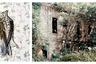Британский фотограф Себастьян Палмер (Sebastian Palmer) чаще всего работает в Лондоне и Сан-Паулу (Бразилия). В работе он сконцентрировался на съемках маргинализированных частей бразильского общества. Палмер уверен, что его фотографии дают возможность высказаться тем, кто подвергается дискриминации.   <br><br> Чаще всего он снимает портреты, но серия фотографий, представленная им на LensCulture, называется «Птичья песня» (Bird song).