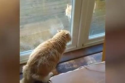 Домашний кот странными звуками прогнал бездомного сородича и попал на видео