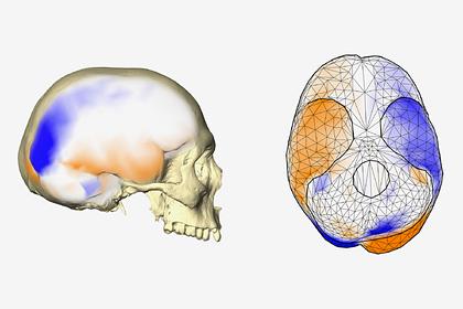 Опровергнута общепринятая гипотеза о мозге человека
