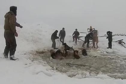 Спасение провалившихся под лед лошадей россиянами попало на видео