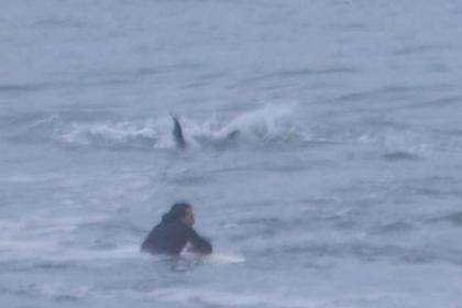 Акула вплотную подплыла к ничего не подозревающему серферу и попала на видео