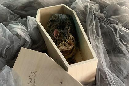 В Москве начали продавать гробы для кошек