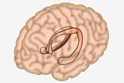 Доказан вред вкусной пищи для мозга