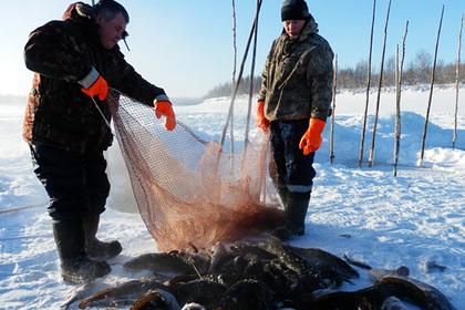 На Ямале выловили 400 тонн рыбы