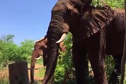 Невозмутимая реакция мужчины на пинок слона попала на видео