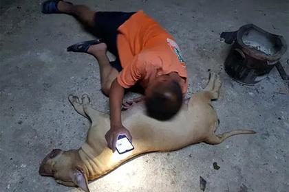 Беременная собака защитила семью от кобры ценой собственной жизни