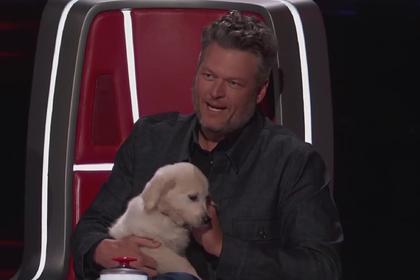 Наставник шоу «Голос» попытался подкупить участника щенком