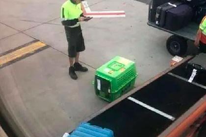 Авиакомпания оставила собаку на раскаленном асфальте и вывела из себя пассажирку