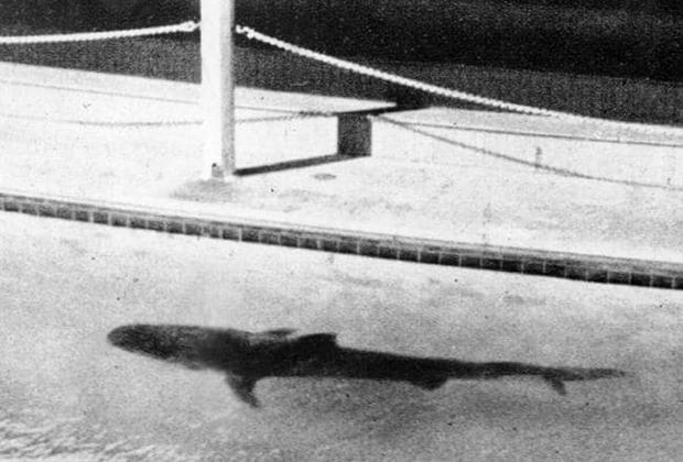 Тигровая акула, помещенная в аквариум развлекательного комплекса Aquarium and Swimming Baths