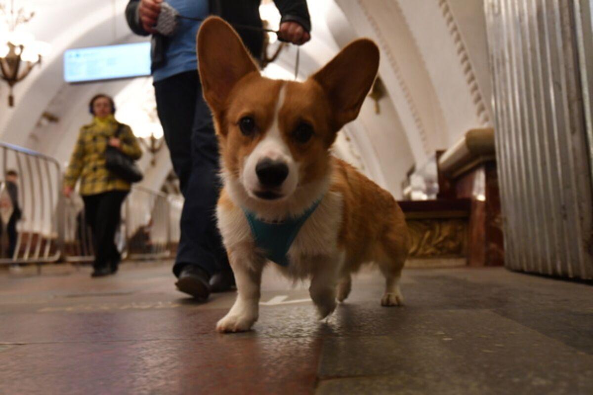 Налог на собак в китае