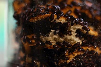 Врачи оценили эффективность поедания жуков для борьбы с раком