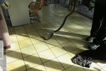 Питон длиной два метра заполз в дом скупых супругов и напугал их