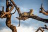 Джанин Крайер (Janine Krayer) родилась в Германии, но уже много лет работает в странах Африки. Самку леопарда она сняла в национальном парке Чобе в Ботсване за несколько минут до начала бури. Животное наслаждается последними солнечными лучами.