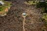 Снимок Мэтта Гиллеспи (Matt Gillespie) представлен в номинации «Американский опыт». На фотографии — дом в штате Джорджия, по которому прошел торнадо. Большинство деревьев вокруг повалено стихией, однако здание уцелело, получив минимальные повреждения.