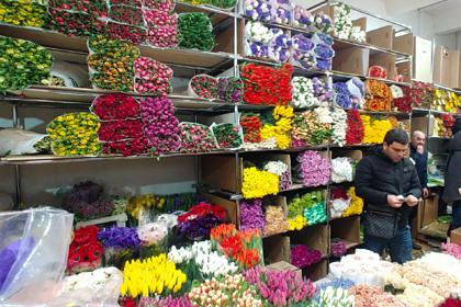 Раскрыта особенность российских мужчин при выборе цветов на 8 Марта