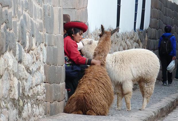 Альпака на улицах Куско