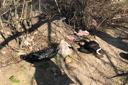 В России возле пруда найдено тело младенца в пакете