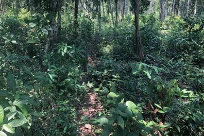 Неожиданно появившаяся собака спасла заблудившуюся в джунглях пару