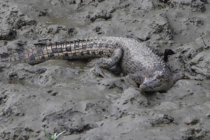 Школьник вырвался из пасти крокодила благодаря находчивости