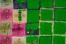 На этом снимке, похожем на разноцветное шахматное поле, в действительности запечатлен процесс производства чая улун, а точнее — его первая стадия. Автор кадра, Тран Туан (Tran Tuan) из Вьетнама, сфотографировал с воздуха, как рабочие из Мок-Чау и Сон-Ла бережно раскладывают зеленые листья для сушки. Насыщенное яркими цветами фото тоже получило национальную премию.