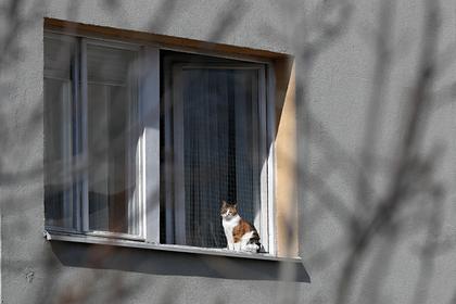 Россияне пожаловались на трудности работы из дома