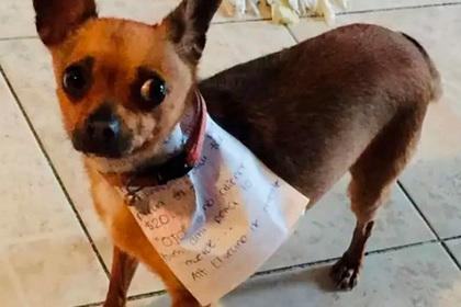 Мужчина на карантине послал собаку в магазин за чипсами