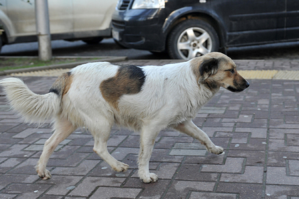 Стая собак напала на шестилетнюю девочку в России