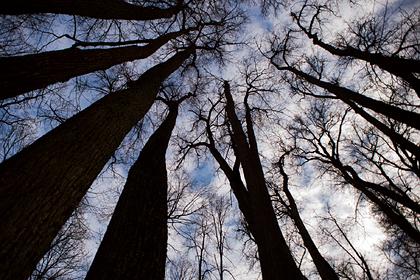 Регионам потребовались дополнительные десятки миллиардов рублей на защиту лесов